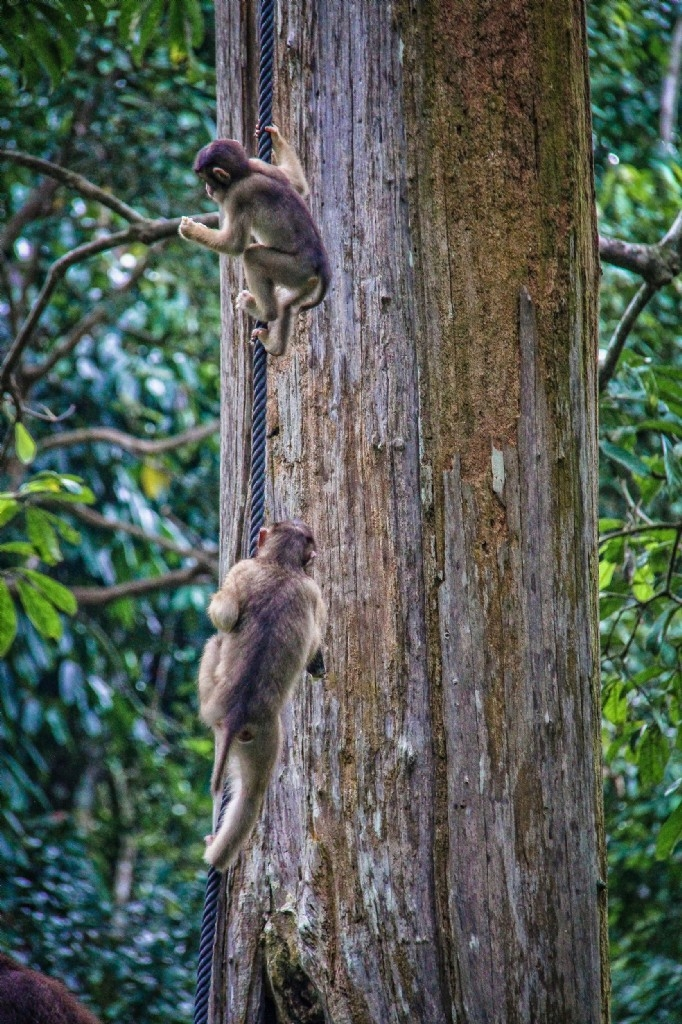 Full day tour - Sepilok Orangutan Rehabilitation Centre