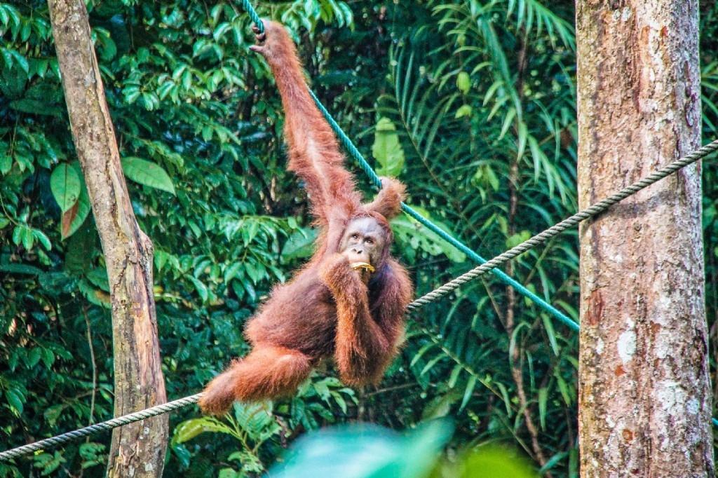 Semenggoh Nature Reserve, Sarawak