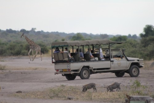 Afternoon game drive