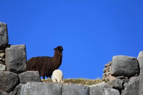 Sacsayhuaman ruins, Cusco