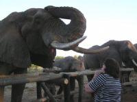 Elephant Sanctuary dinner