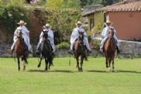 Peruvian Horse Show